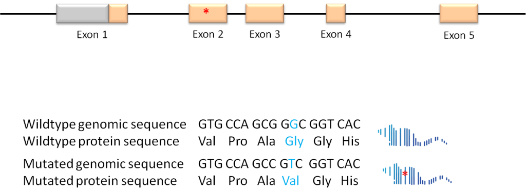 Conventional Point Mutation from GeneTargeting.com