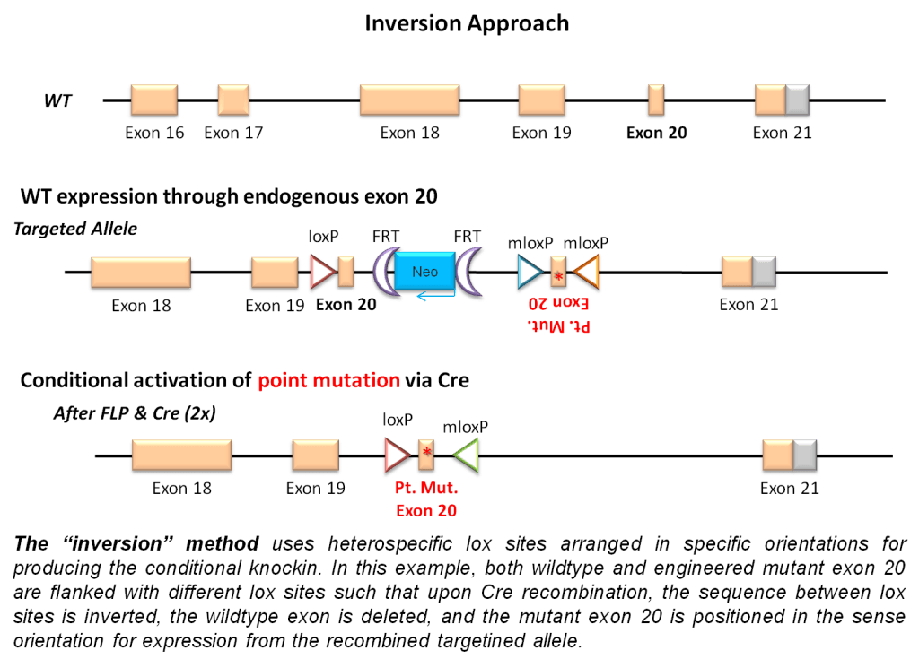 Inversion Approach from GeneTargeting.com