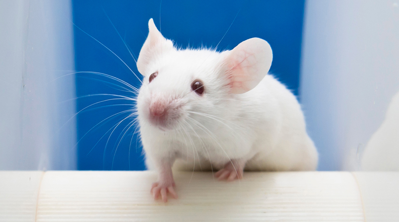 Knockout Mice In Cushing's Syndrome Research