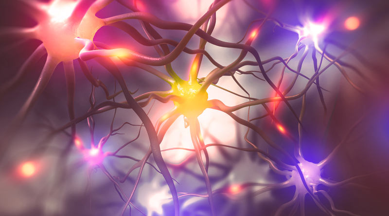 A New Mouse Model for Studying Brain Cell Activity
