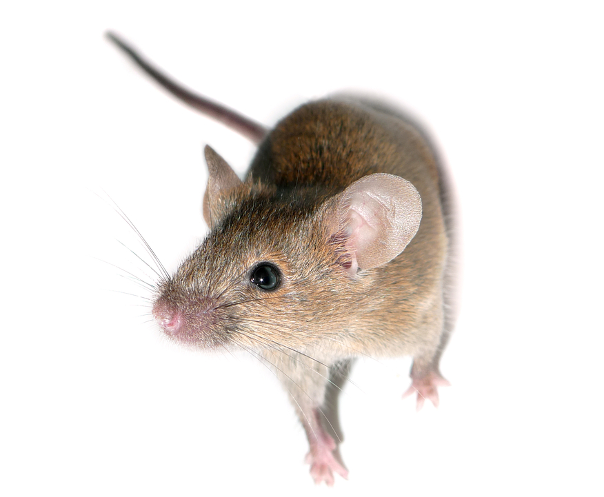 The Value Of Knockout Mouse Models