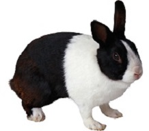 custom rabbit models