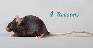 reasons to use transgenic mice