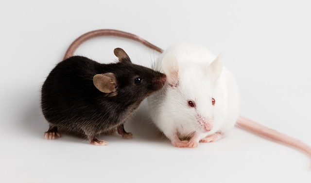 A new mouse line for tissue-specific expression