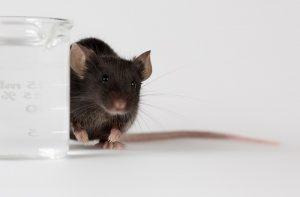 knockin mouse model