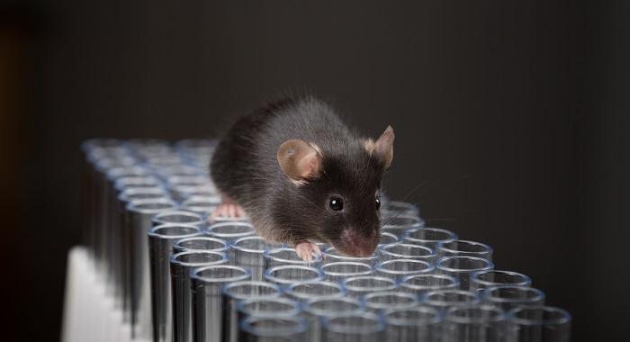 Aha! I Need a Gene Knockin Mouse... Now What?