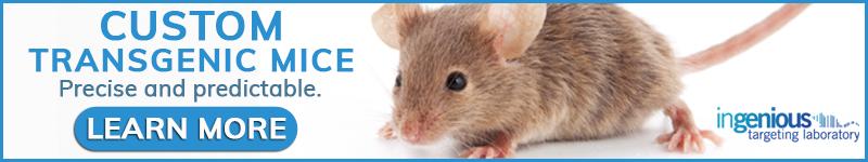 Custom Transgenic Mice