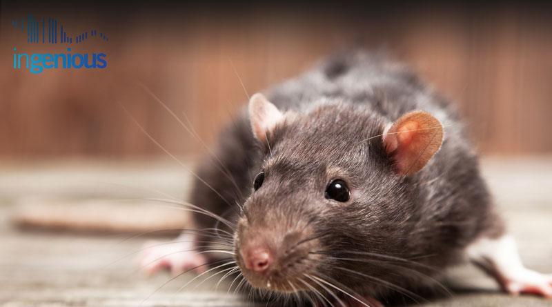 CRISPR Cas9 Conditional Knockout Mouse Model