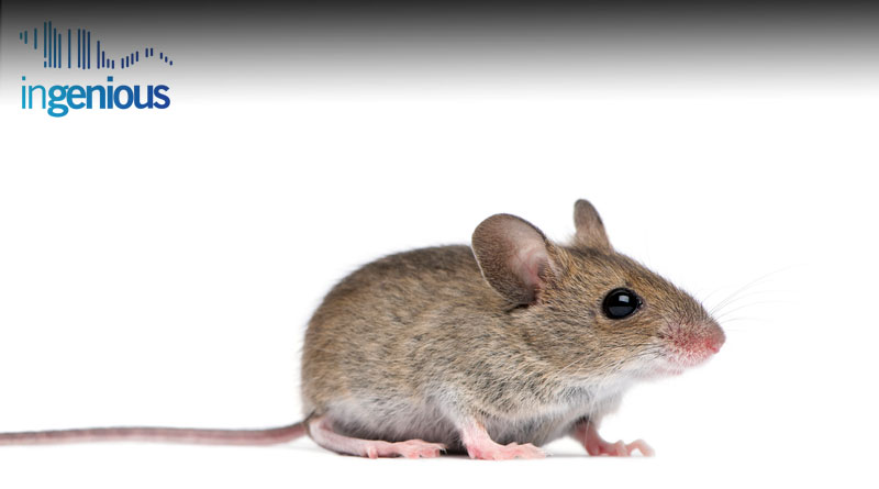 CXCR4 Conditional Knockout Mouse