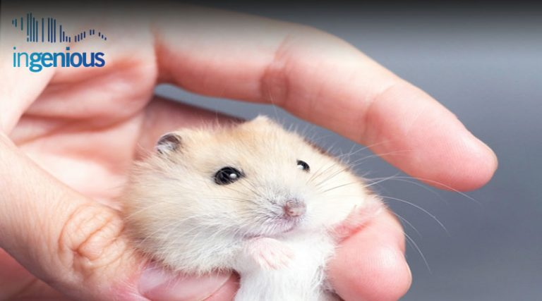 Conditional Gene Knockout Mouse