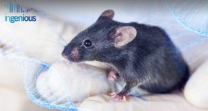 How to Make a Transgenic Mouse