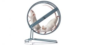 Healthier Mice Born to Fathers Who Exercised