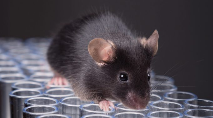 Healthy Mice Born from Same-Sex Parents