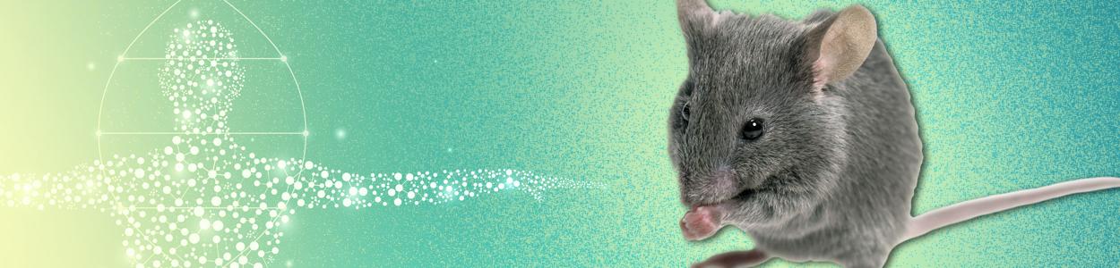 Humanized Mice
