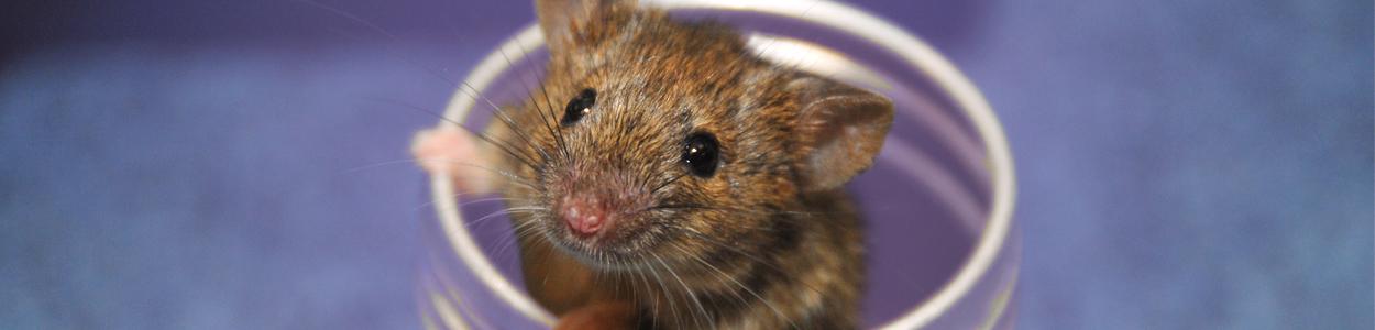 Knockin Mice
