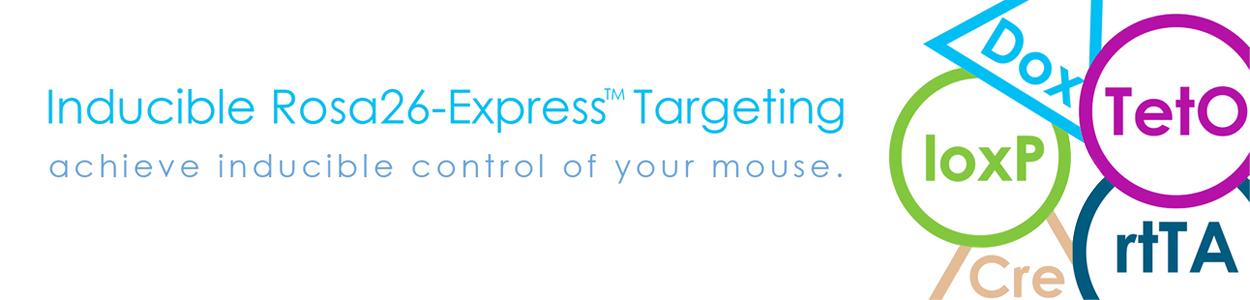 Inducible Rosa26-Express™