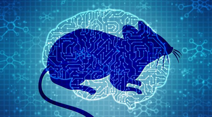 Mouse Models With Mutated Immune Cells Showed Risk Of Alzheimer's Disease