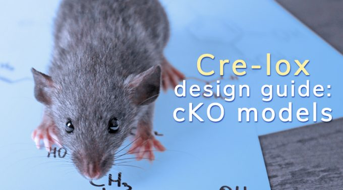 New Cre-Lox Design Guide For Conditional Knockout Mouse Models