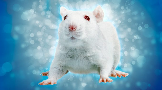 New Frontiers for Rat Models of Cerebral Palsy