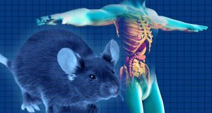 Mouse Models Demonstrate Connection Between Gut Microbiome And Cancer Prevention