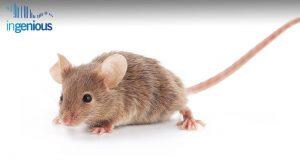 APC Flox Mice