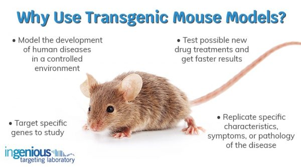 (PDF) Technical approaches for Mouse Models of Human Disease