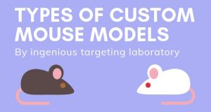 Types Of Custom Mouse Models