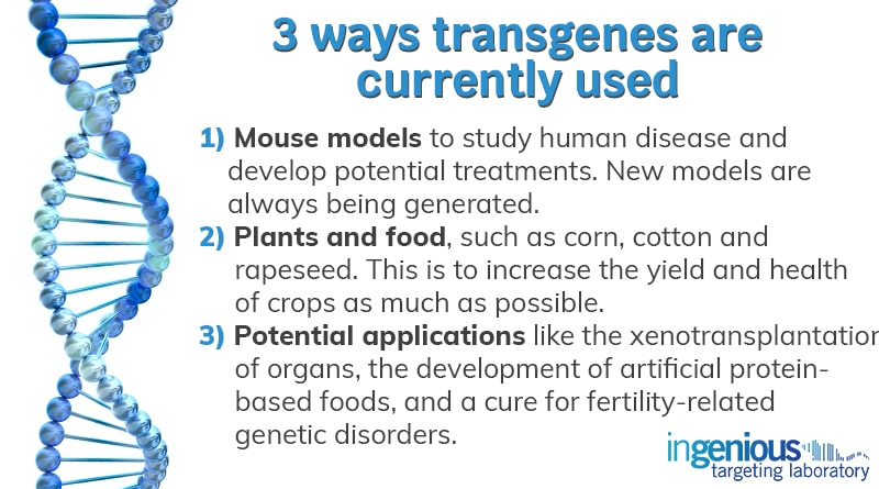 How Are Transgenes Used Today?