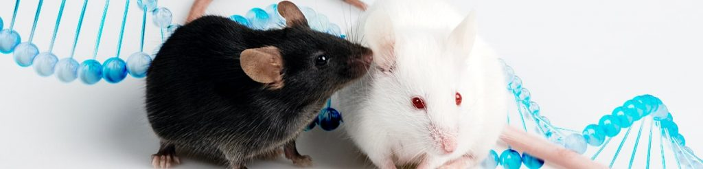 Buy Transgenic Mice